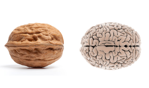 02-Walnut-BrainFoods-That-Look-Like-Body-Parts-10