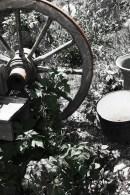 Faded Wagon Wheel