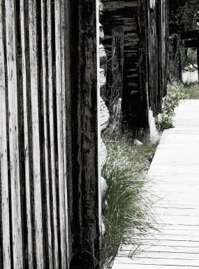Grass on the boardwalk