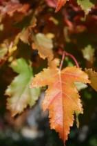 Perfect leaf