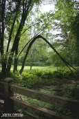 Peaceful bridge