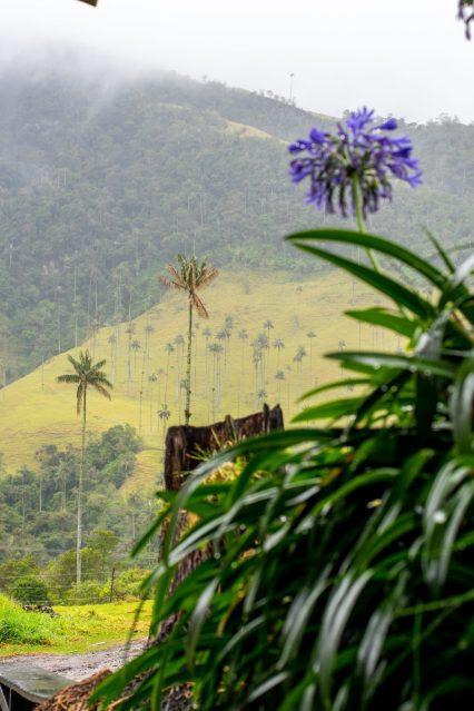 Salento Valle de Cocora Wax Palm Trees