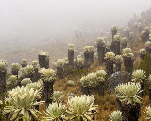 Paramo De Oceta – 1 of Colombia's Amazing Hikes