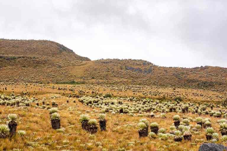 Paramo De Oceta – 1 of Colombia's Amazing Hikes