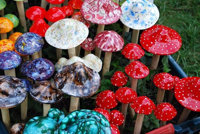 Тайны грибов в их разумности