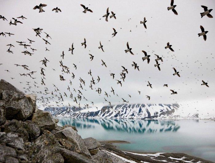 Долина падающих птиц