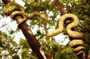 Кеймада Гранди остров змей в Атлантике