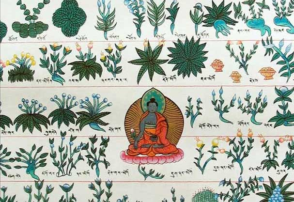 Препараты тибетской медицины. Обзор самых известных лекарств