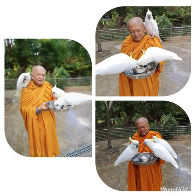 Випассана медитация монахом
