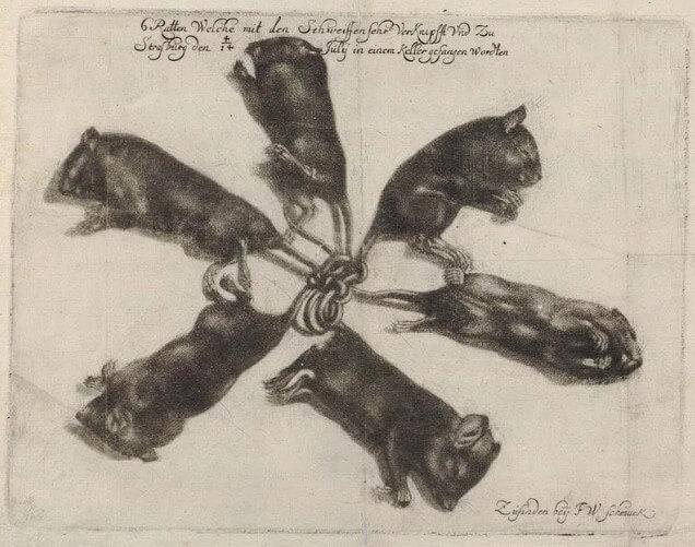 рисунок крысиного короля