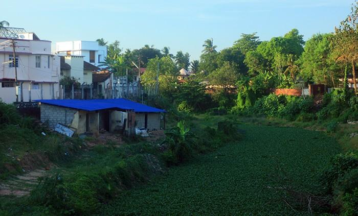 тропинка из ряски в Керале