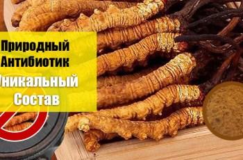 Купить Ярсагумбу с Гималаев - Восстановление Мужской Силы