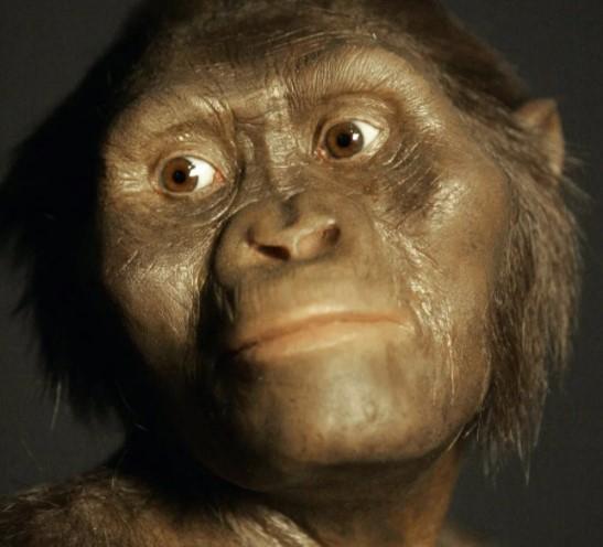Человека создала Лень. Теория происхождения от обезьяны