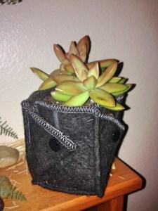 ez swap succulent pot1