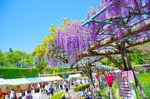 蓮華寺池公園1