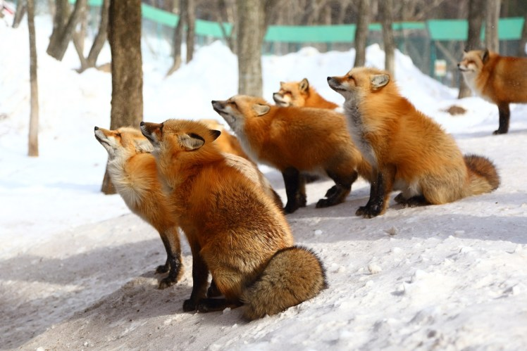 狐狸村1.JPG