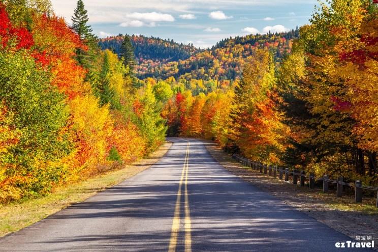 加拿大楓葉大道