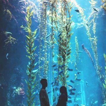 國立海洋生物博物館 圖/IG_@thesunshineboy_