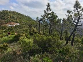 Trail des Balcons d'Azur - l'estérel