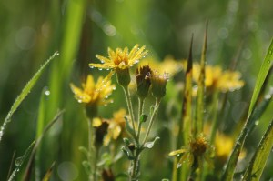 Wildflowers with raindrops