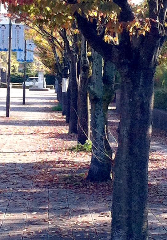 福岡市総合図書館の前の道