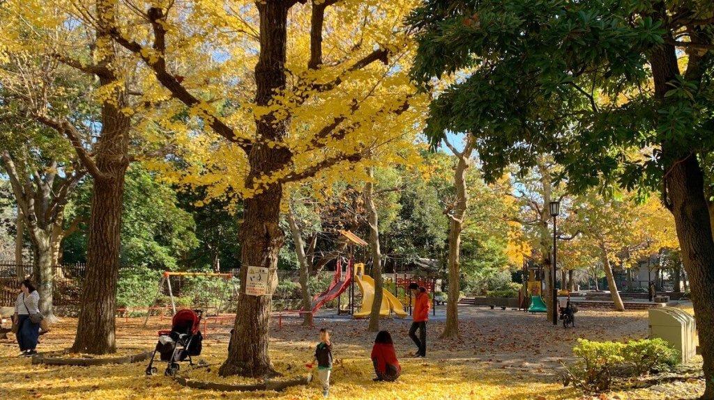 清澄公園の銀杏