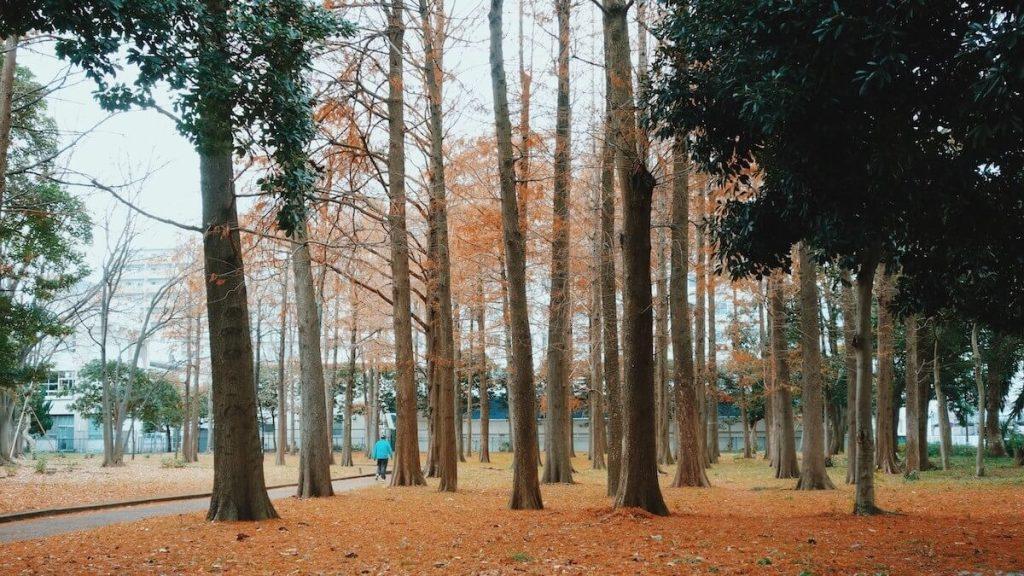 猿江恩賜公園落葉