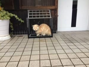あめよけネコ① (1)