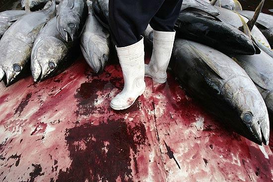 Pescador com atum amarelo em porto nas Filipinas; reunião no Brasil deve restringir pesca do atum vermelho