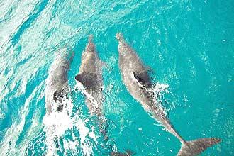 Golfinhos rotadores, em Fernando de Noronha, Pernambuco; costa brasileira é declarada santuário pelo Governo Federal