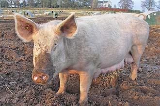 A respiração dos animais é fator importante de emissão de gás-estufa por responsabilidade humana, dizem pesquisadores