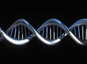 Pesquisadores do Instituto de Biociências da USP encontram indícios de hélice tripla em DNA de células vivas de insetos