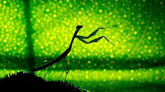 O fotógrafo israelense Nadav Bagim faz fotos com insetos que estão no jardim ou em sua casa; veja mais fotos