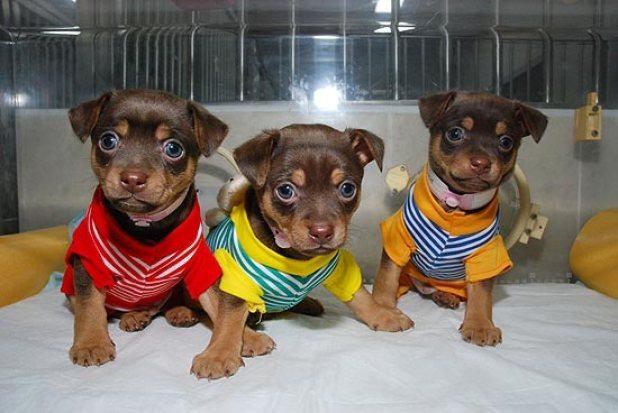 """Cachorros em cena da nova série """"Clones de Estimação"""""""