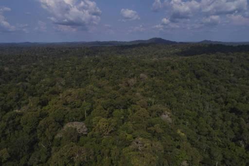 Floresta Estadual do Paru, no Pará, que fica dentro da área da Renca