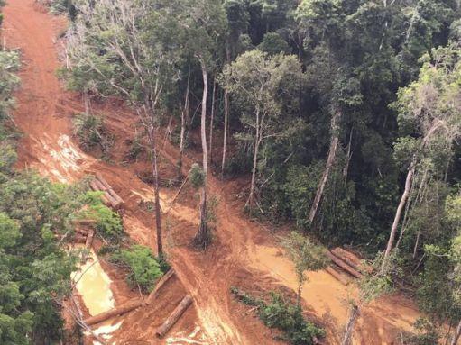 Pontos de extração ilegais e madeireiras clandestinas na Amazônia