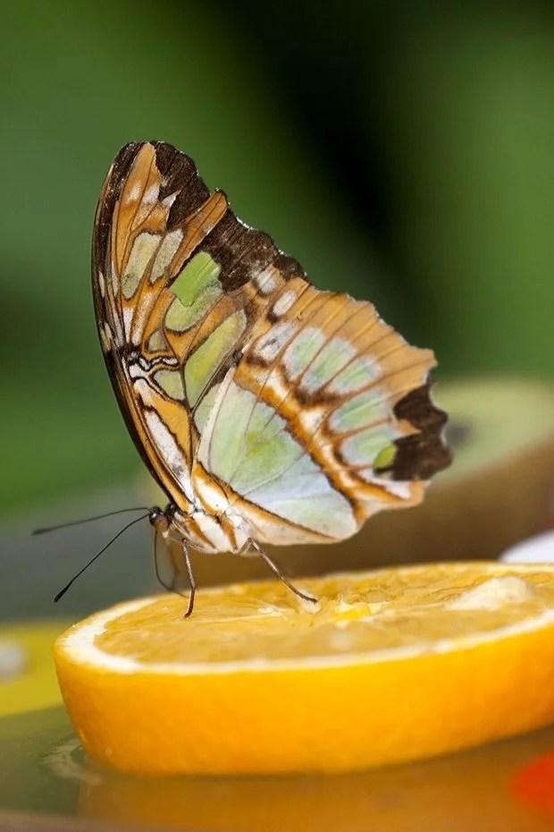 Waar Leven Vlinders 0vlinders0 Jouwweb Nl