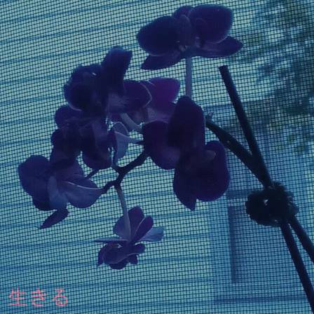 LBN667 – 生きる [ARC-053]