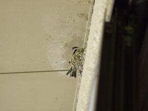 泊まった部屋の窓の上にいた先客