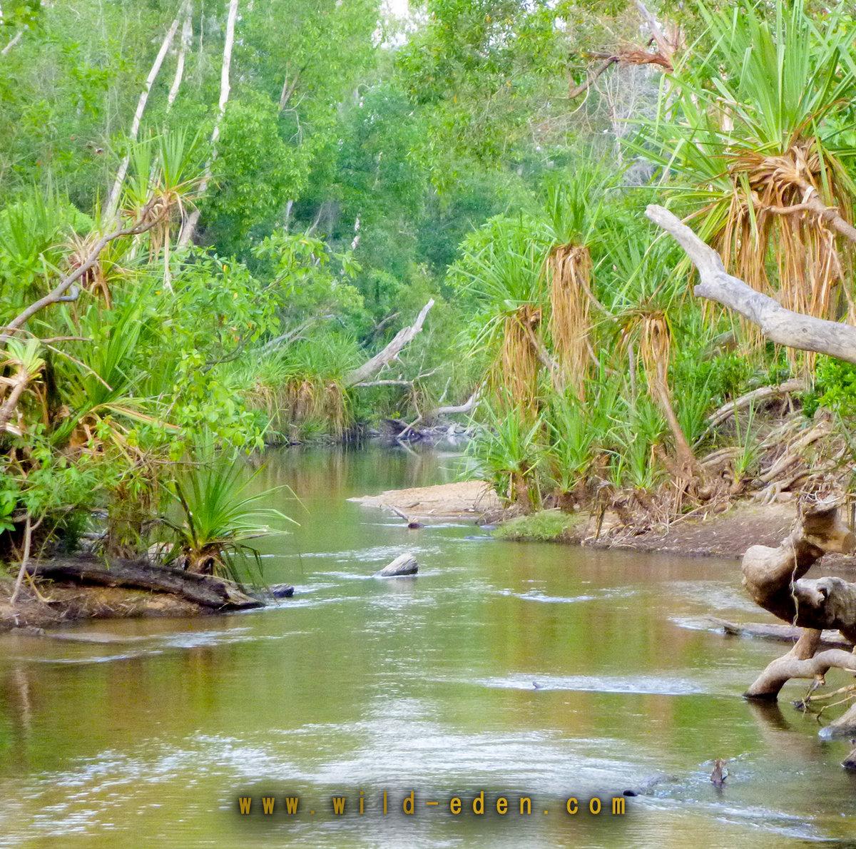 Tropical Rainforest Tropical Rainforest Sounds