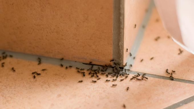 How To Get Rid Of Ants In My Bedroom