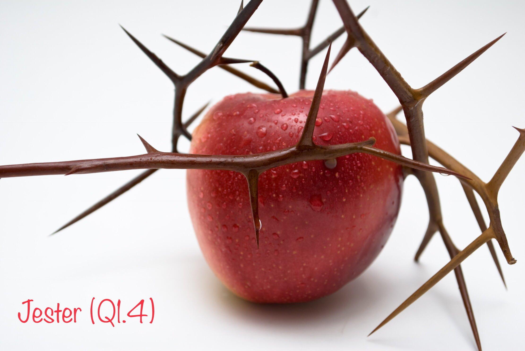 JESTER (Q1.4)