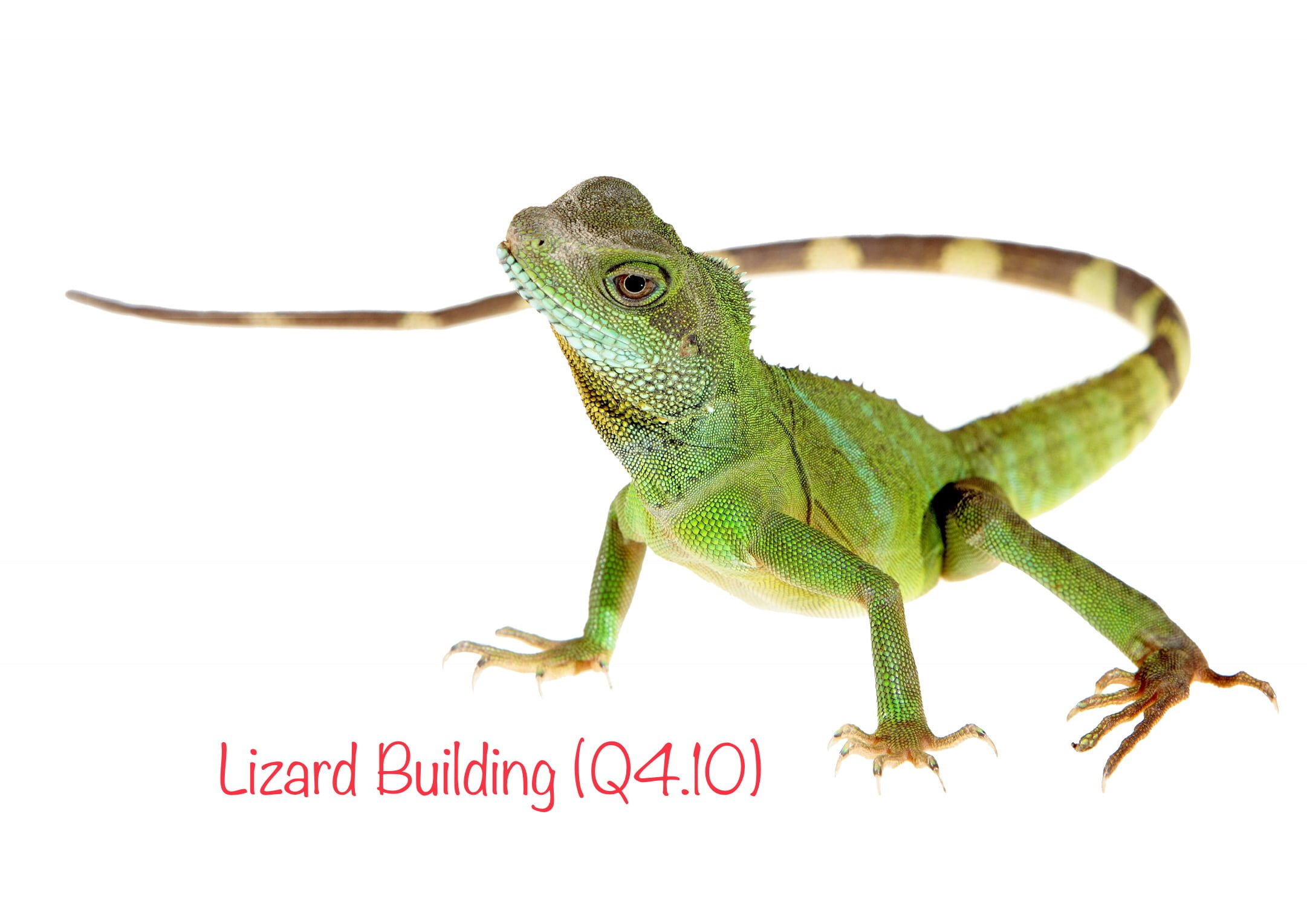 LIZARD BUILDING (Q4.10)
