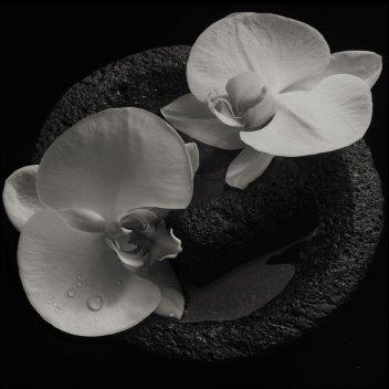 Resultado de imagen de Mike Patton & Jean Claude Vannier - Corpse Flower