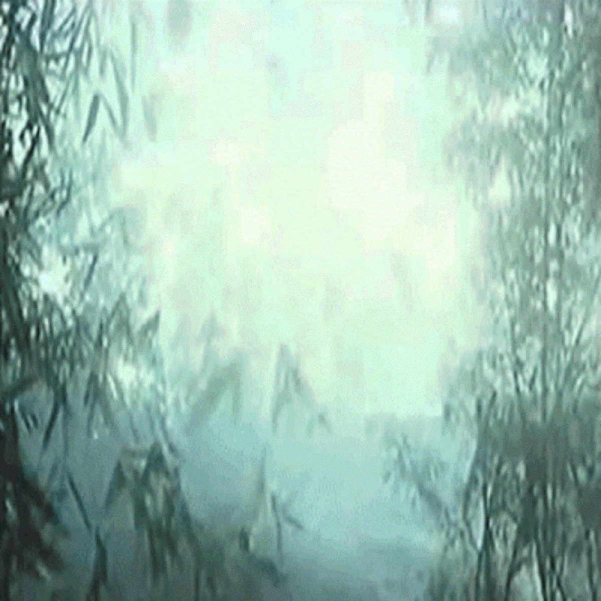 NewFreshAir – 森の世界
