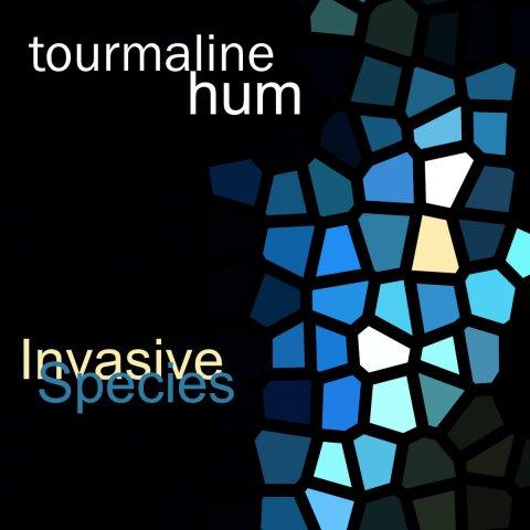 tourmaline hum – Invasive Species