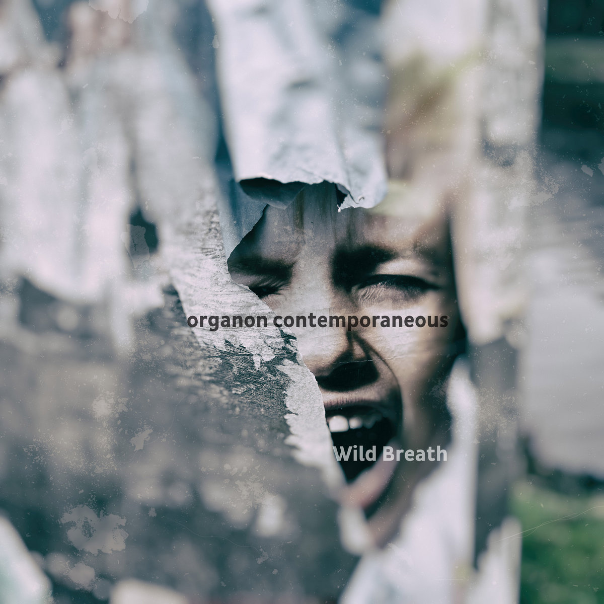 organon contemporaneous – Wild Breath