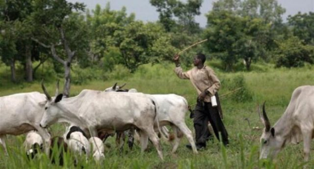 Presidency: Southern governors' plan to enforce open grazing ban is of questionable  legality