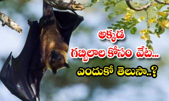 TeluguStop.com - Scientists Focus On Bats For Clues To Prevent Next Pandemic