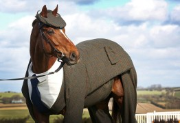 horse suit